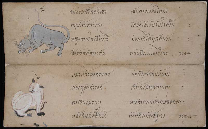 Korat cat and Siamese cat in Tamra Maew (The Cat-Book Poems) thought to originate from the Ayutthaya Kingdom (1351 to 1767 AD).